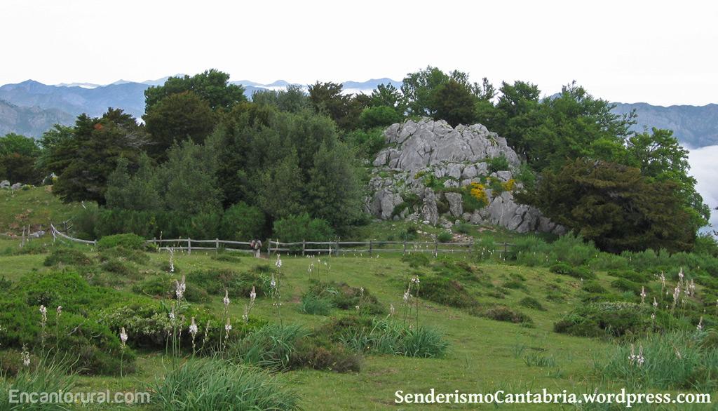brana-tejos-cantabria