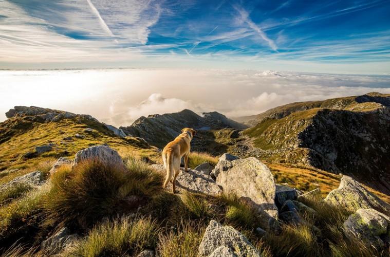 Turismo rural con mascotas
